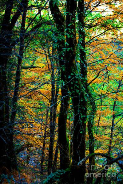 Photograph - Colorful Autumn by Edgar Laureano