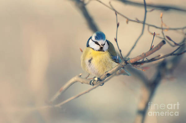 Photograph - Colorful Bird Sitting On A Thin Branch by Jaroslaw Blaminsky