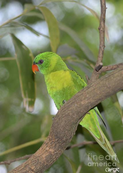 Photograph - Colorful Bird by Wanda Krack
