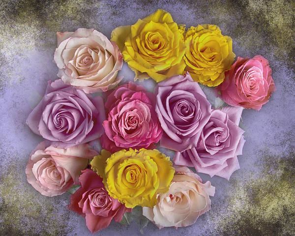 Photograph - Colorful Bouquet Of Roses by James BO Insogna