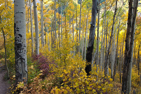 Photograph - Colorful Colorado Forest by Cascade Colors