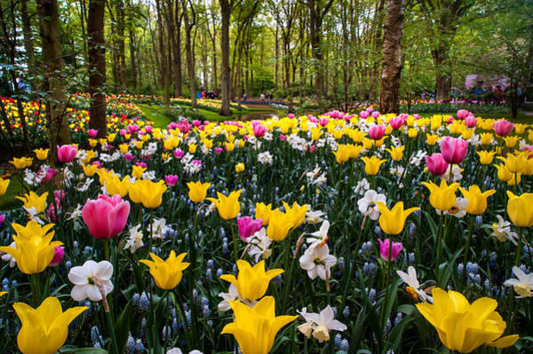 Queens Birthday Photograph - Colorful Corner Of The Keukenhof Garden 1. Tulips Display. Netherlands by Jenny Rainbow
