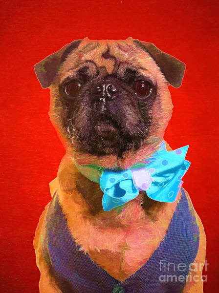 Pug Photograph - Colorful Dapper Pug by Edward Fielding