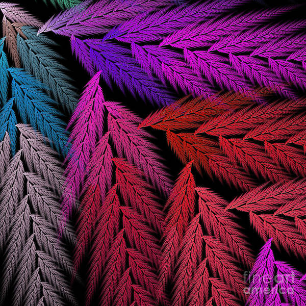 Digital Art - Colorful Feather Fern - Abstract - Fractal Art - Square - 4 Lr by Andee Design
