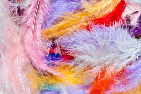 Wall Art - Photograph - Colorful Feathers by Tom Gowanlock