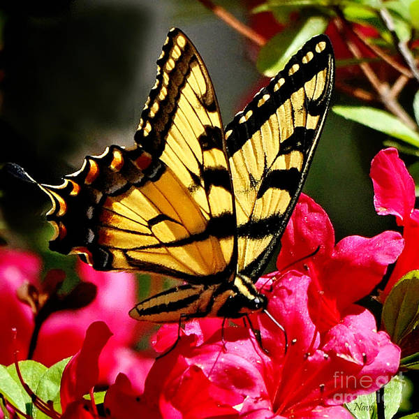 Azalia Photograph - Colorful Flying Garden by Nava Thompson
