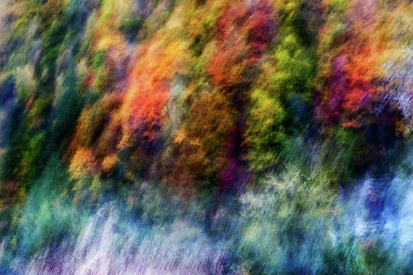 Filter Photograph - Colorful Forest by Wei He