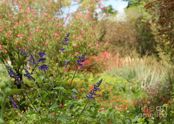 Photograph - Colorful Garden In Spring by Sabrina L Ryan