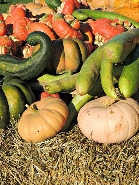 Photograph - Colorful Gourds by Kimberly Perry