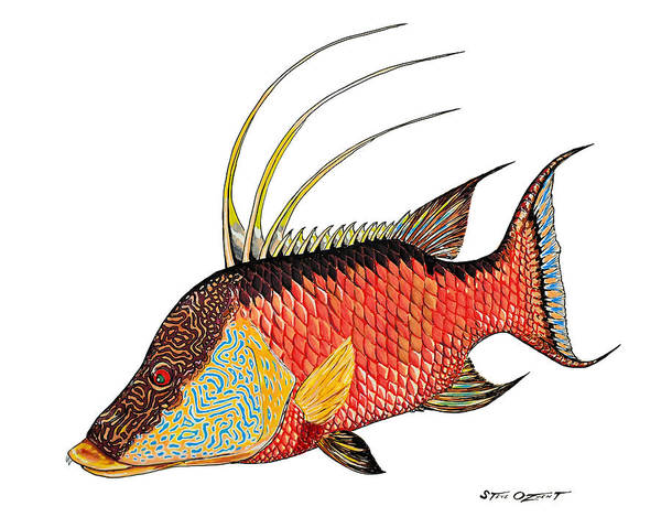 Painting - Colorful Hogfish by Steve Ozment