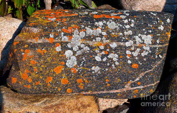 Photograph - Colorful Moss Spots On A Rock by Les Palenik
