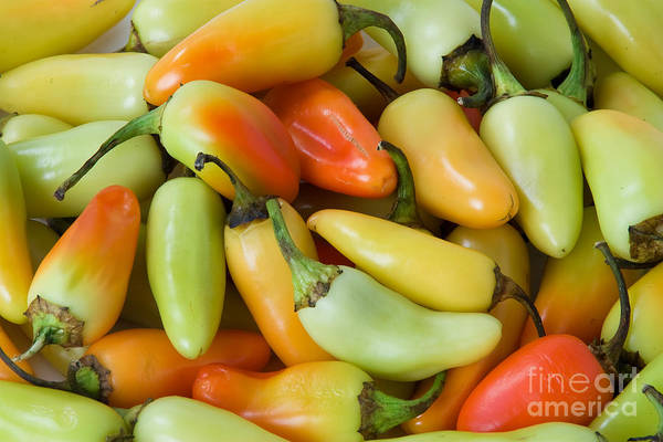 Photograph - Colorful Peppers by James BO Insogna