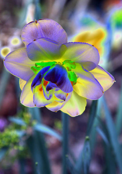 Dafodil Photograph - Colorful Spring by Christiane Schulze Art And Photography