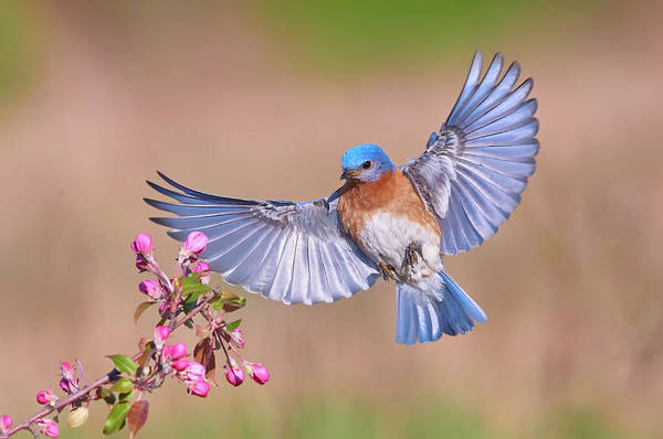 Flying Bird Photograph - Colorful Spring by Jim Luo