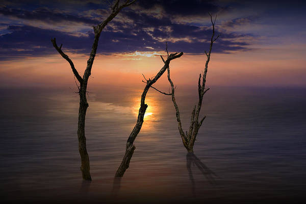 Photograph - Colorful Sunset Seascape With Tree Trunks by Randall Nyhof