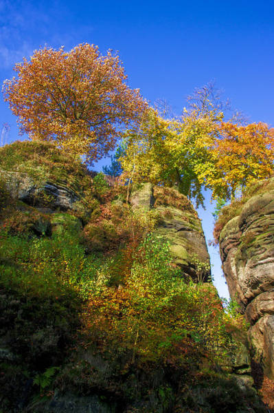 Colorful Trees In The Elbe Sandstone Mountains Art Print