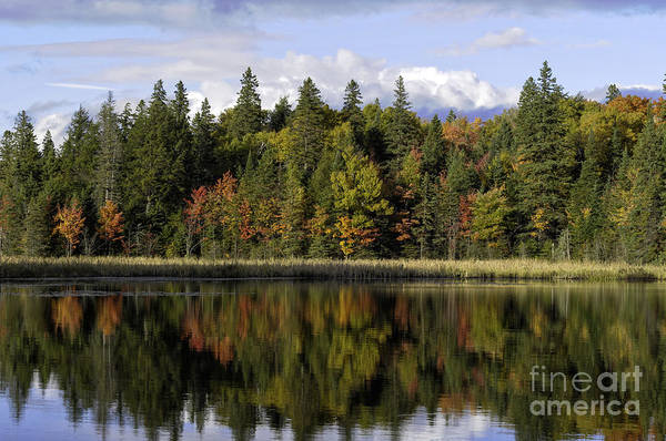 Photograph - Colorful Trees Reflected In A Lake by Les Palenik