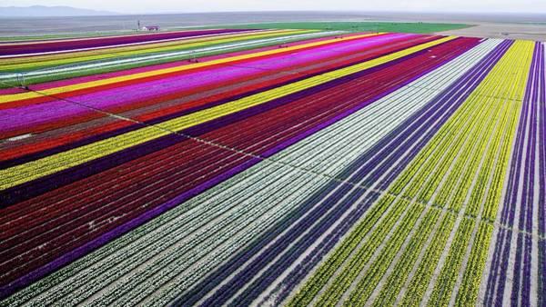 Offbeat Photograph - Colorful Tulip Fields In Turkeys Konya by Anadolu Agency