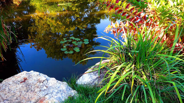 Photograph - Colorful Water Plant Landscape Garden by Patrick Malon