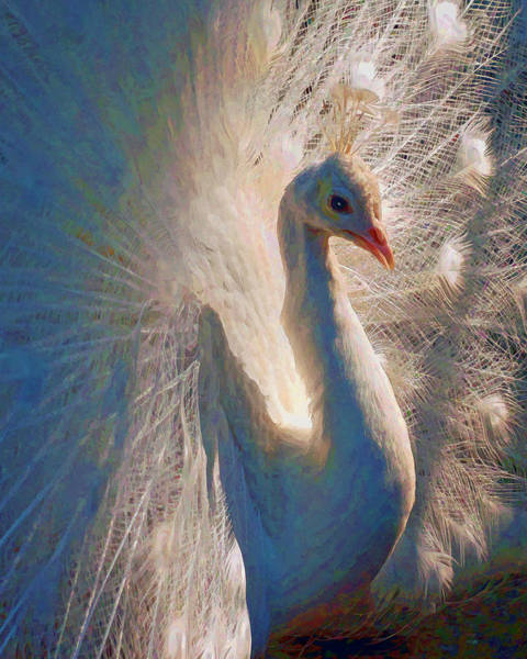 Photograph - Colorful White Peacock by Jerry Gammon