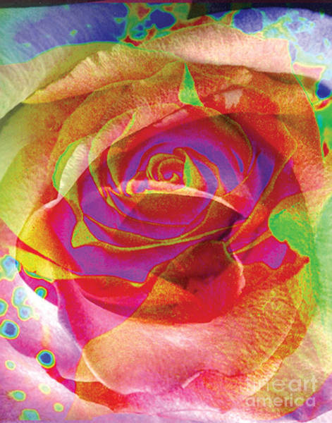 Colorfull Rose Art Print