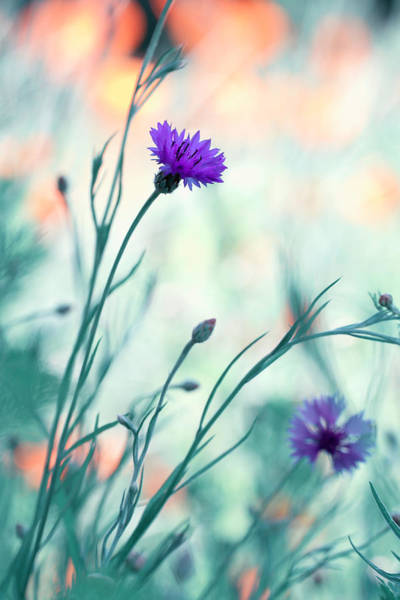 Bokeh Wall Art - Photograph - Colors Game 2 by Fabien Bravin