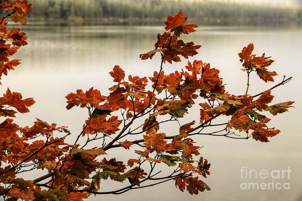 Colors Of Autumn Art Print