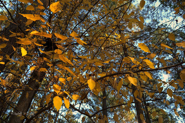 Photograph - Colors Of Fall by Paulette B Wright