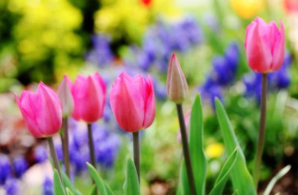 Photograph - Colors Of Spring by Trina  Ansel
