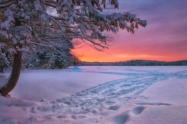 Photograph - Colors Of Winter by Darylann Leonard Photography