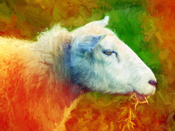 Painting - Colorsheep by Lutz Baar