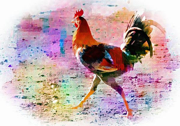 Photograph - Colorwash Cock by Alice Gipson