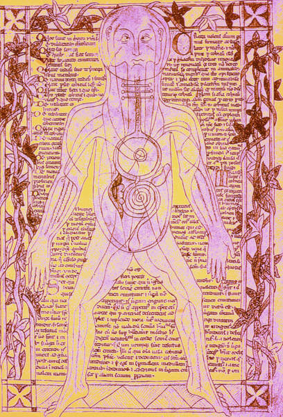 Digestive Systems Photograph - Coloured Medieval Drawing Of Human Venous System by Mehau Kulyk/science Photo Library