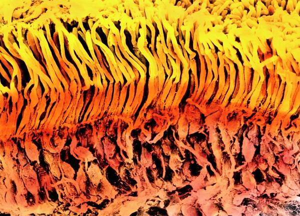 Wall Art - Photograph - Coloured Sem Of A Section Through The Human Retina by Photo Insolite Realite & V. Gremet/science Photo Library