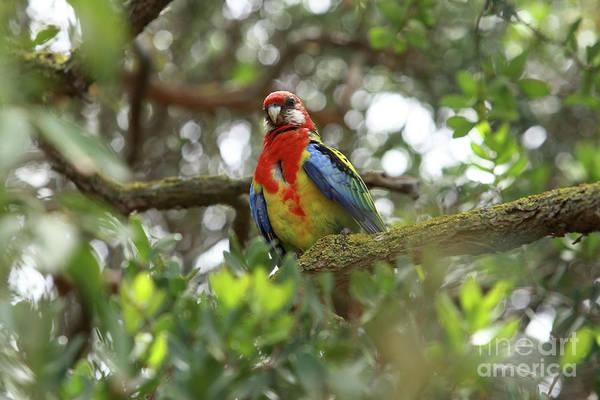 Photograph - Colourful Parrot by Aidan Moran