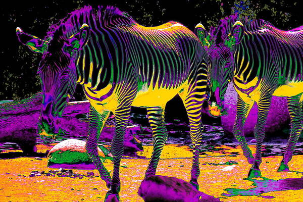 Photograph - Colourful Zebras  by Aidan Moran