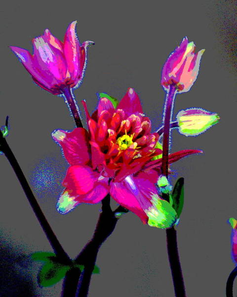 Photograph - Colours In The Garden by Ben Upham III