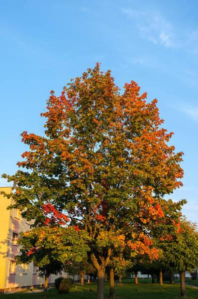 Photograph - Colours Of Autumn by Tgchan