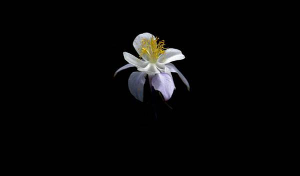 Photograph - Columbine by David Andersen