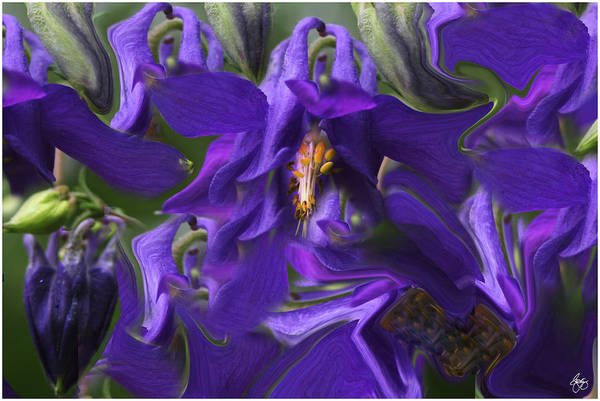 Photograph - Columbine Storm by Wayne King