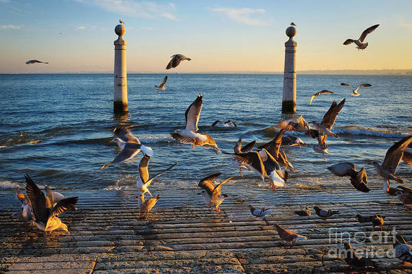 Town Square Wall Art - Photograph - Columns Dock In Lisbon by Carlos Caetano