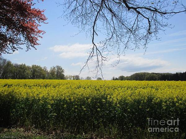 Photograph - Colza Field Near Luxembourg by Chani Demuijlder