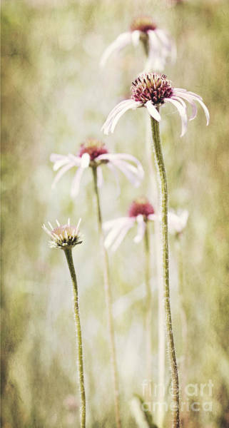 Photograph - Come Dance With Me by Pam  Holdsworth