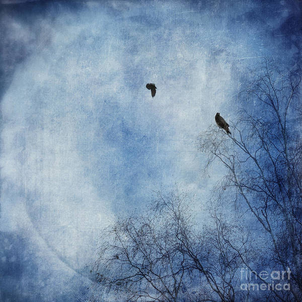 Dazzle Wall Art - Photograph - Come Fly With Me by Priska Wettstein