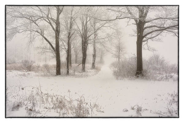 Laurel Wall Art - Photograph - Come Out And Play by Robert Fawcett