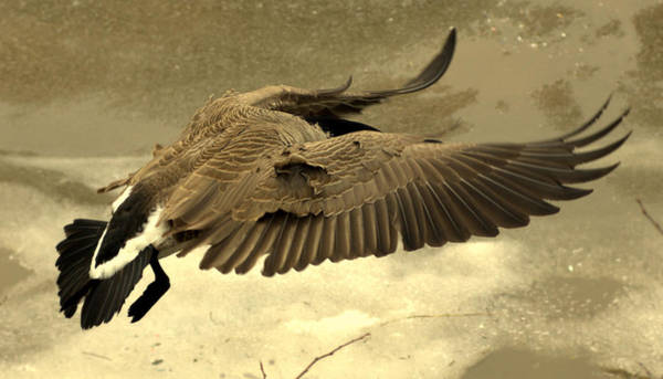 Photograph - Coming In For A Landing by Jeremiah John McBride
