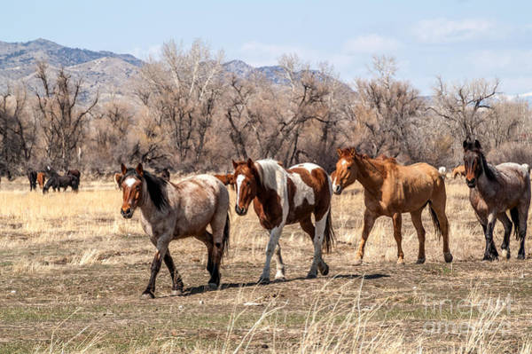 Photograph - Coming In by Sue Smith