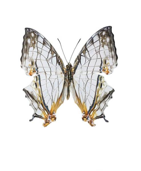 Wall Art - Photograph - Common Map Butterfly by Lawrence Lawry