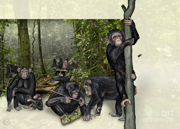 Painting - Robust Chimpanzees Pan Troglodytes - Zoo Interpretive Panel  by Urft Valley Art