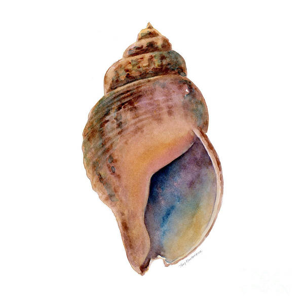 Wall Art - Painting - Common Whelk Shell by Amy Kirkpatrick